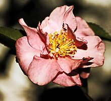 Not Just Another Pretty Camellia by Evita