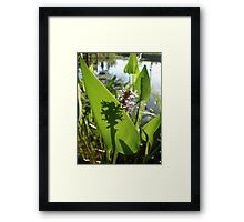Pickerel Weed and Shadows Framed Print