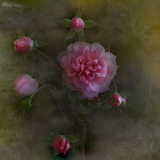 Rose Montage by Dianne English