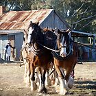 Working Horse Display by Julie Sleeman