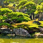 Moss garden and Cypress trees in Kyoto, Japan. by johnrf