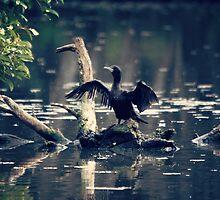 Winged Performer by yolanda