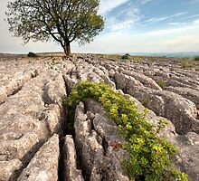 Malham Majesty by SteveMG