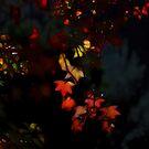 Autumns Glow by John Morton