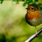 robin red breast ... by Gregoria  Gregoriou Crowe