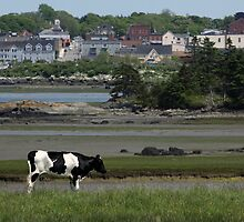 Yarmouth Cow by Debbie  Roberts