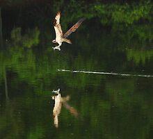 Morning catch by Adam Wignall