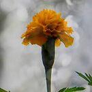 It's a flower... ©  by Dawn M. Becker