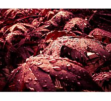 After - rain of the mourning sun Photographic Print