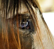 Window to the Soul by Melissa-Louise