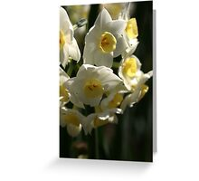 Happy Cluster - Daffodils Greeting Card