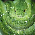 Green Tree Snake by NicoleConrau