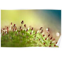 Sundew with Blue Poster
