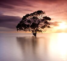 Isolation by Andrew Tallon