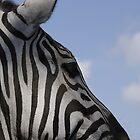 Grant's zebra by Andreas  Berheide