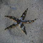 Starfish by Anne-Marie Bokslag