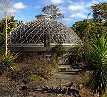Mt Coot-tha Botanic Gardens • Brisbane • Australia  by William Bullimore