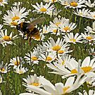 Guardian of the Daisies by Mark Hughes