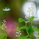 Wild flowers in grove by natans