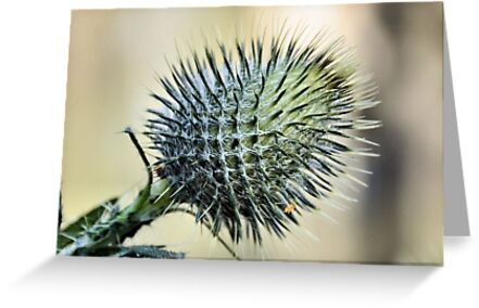 Prickly by Vicki73