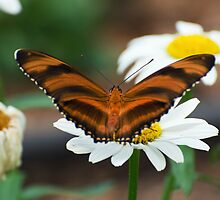 Banded Orange by cherylc1