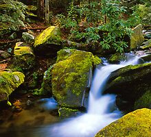 STREAM,ROARING FORK by Chuck Wickham