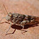 Grasshopper by Sanne Hoekstra