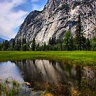 Reflecting in the Meadow by Barbara  Brown