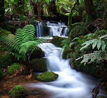 A Lush Cascade by Sean Farrow