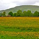 Buttercup Meadow by Trevor Kersley