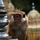 Cheeky Monkey by liza1880