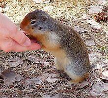 Hand Feeding a Marmet, by AnnDixon