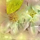 Pastel Clematis in Stone by Elaine  Manley