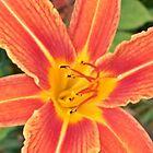 "Orange One by Scott ""Bubba"" Brookshire"