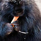 """Tasty Carrot"" Procupine at Cheyenne Mountain Zoo by Zeibyasis"