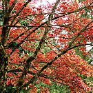 Blazing Tree Large by carolssecrets
