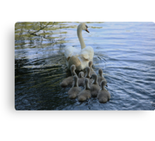 Mother Swan And Cygnets Canvas Print