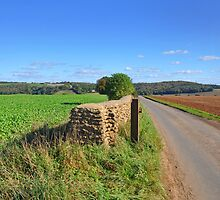 Cotswold Lane, Gloucestershire by Nick  Gill