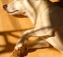Let Sleeping Dogs Lie on the Laminate  by Mike  Waldron