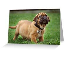 Pure Puppy Innocence Greeting Card