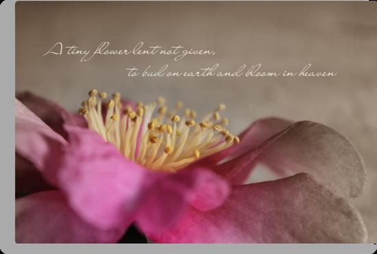 A Tiny Flower by CarlyMarie