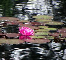 Water Lily by Bernie Garland