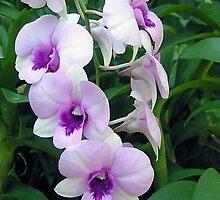 Orchid by John Vriesekolk