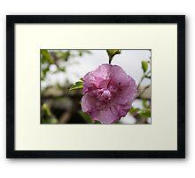 ANT IN FLOWER  Framed Print