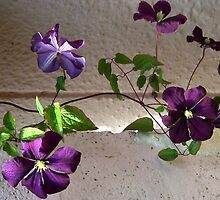 Purple Flowers On The Vine by lynn carter