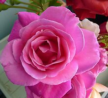 Divinely Pink by DEB CAMERON