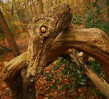 Dragon in the woods. by Billlee