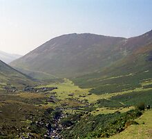 Indy in the Aber Valley by Michael Haslam