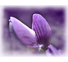 Purple Diva Photographic Print