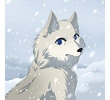 Winter wolf Photographic Print